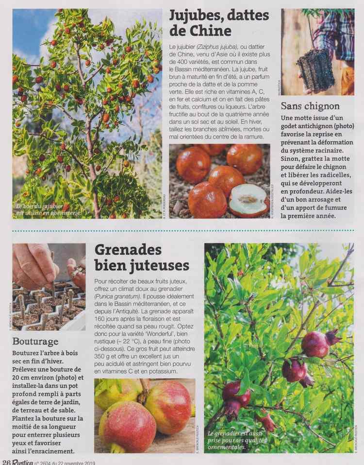 au jardin - Page 18 2020