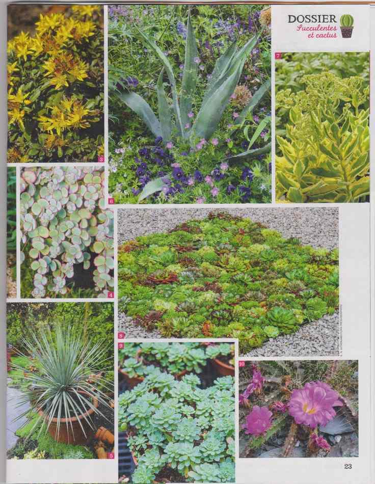 au jardin - Page 6 2111