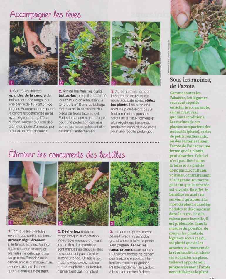 au jardin - Page 12 2112