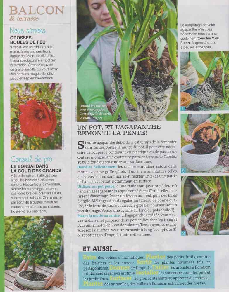 au jardin - Page 4 224