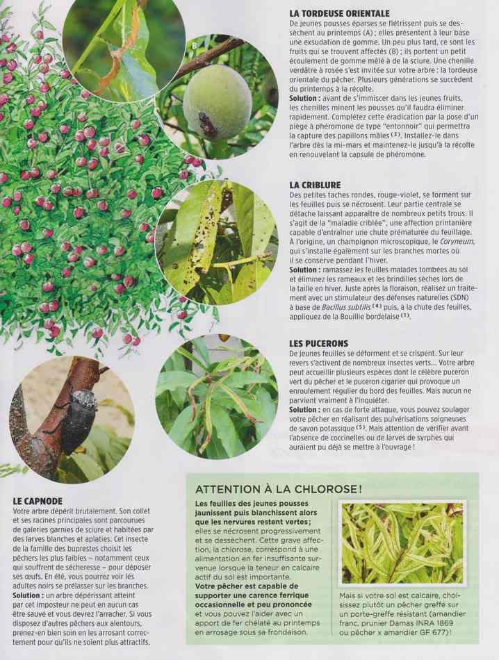 au jardin - Page 4 2311