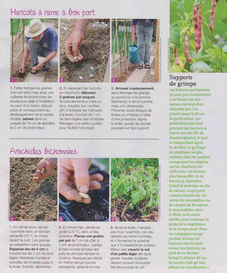 au jardin - Page 12 2312