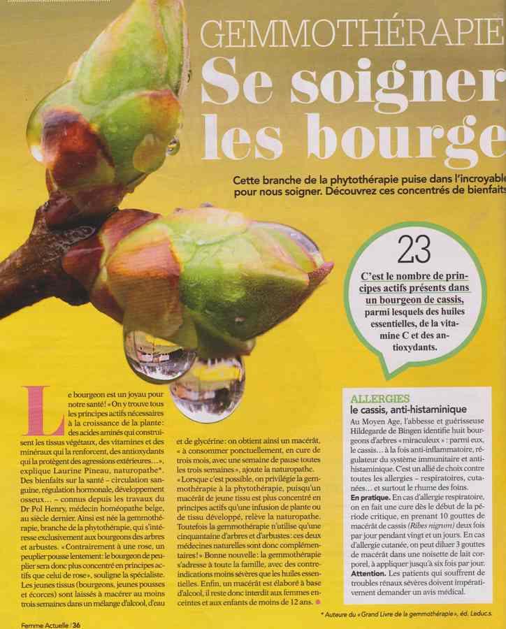 les plantes qui soignent - Page 11 2328