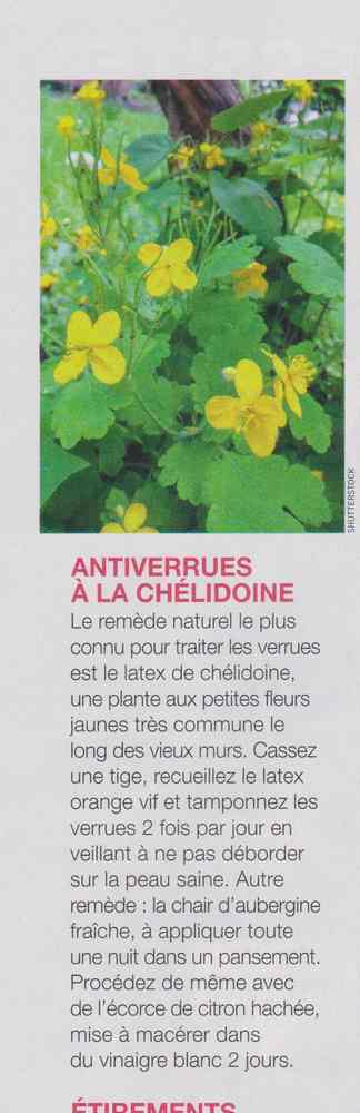 les plantes qui soignent - Page 5 237