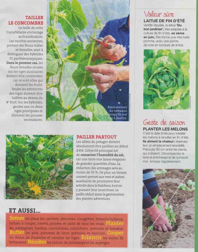 au jardin - Page 6 239