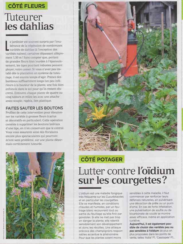 au jardin - Page 6 243