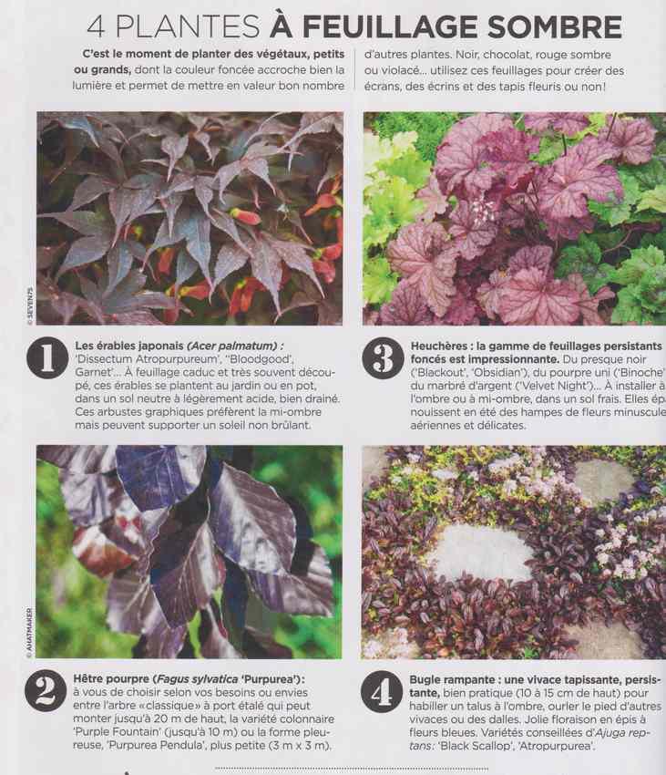 au jardin - Page 16 2513