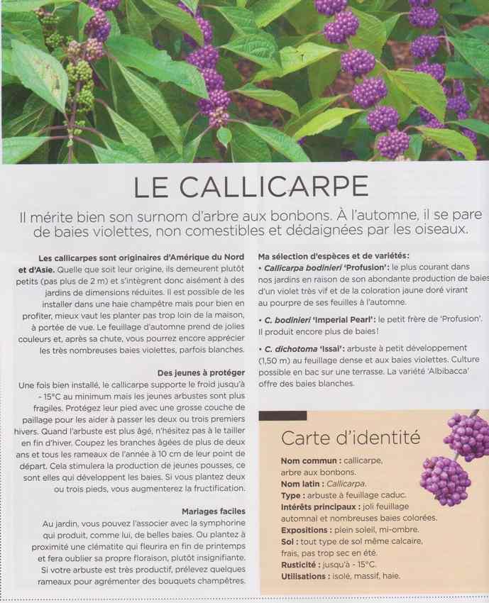 au jardin - Page 16 2612
