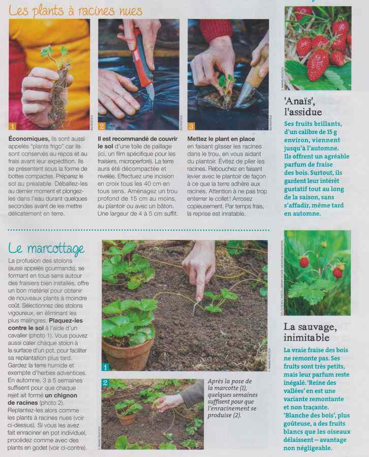 au jardin - Page 11 266
