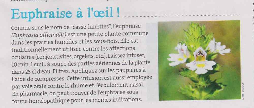 les plantes qui soignent - Page 8 272