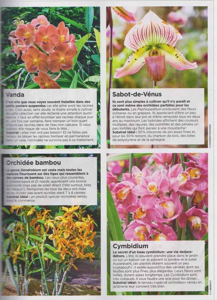 au jardin - Page 17 2913