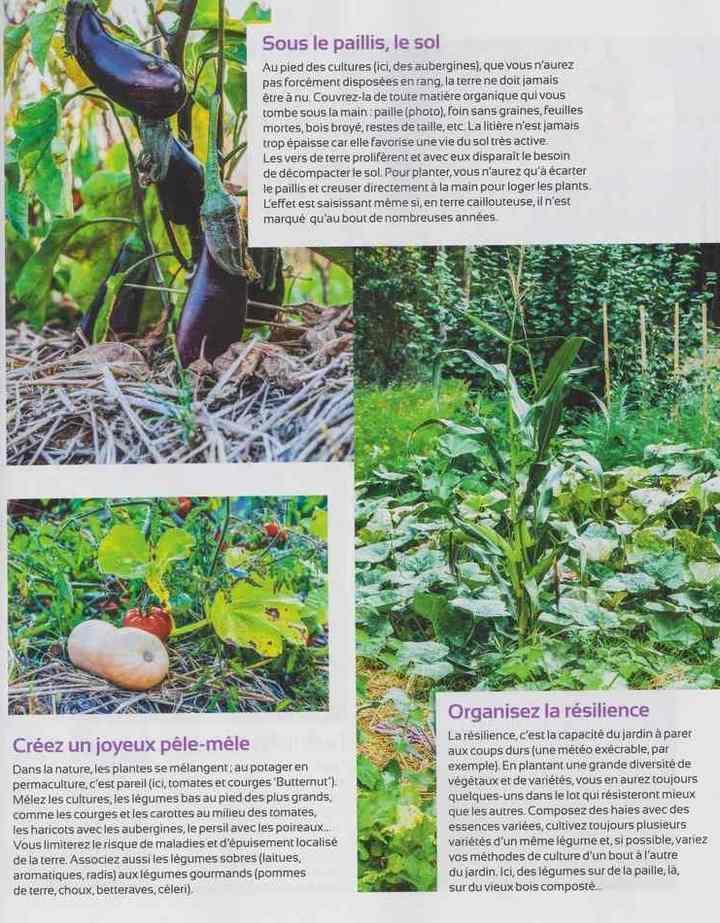 au jardin - Page 2 317