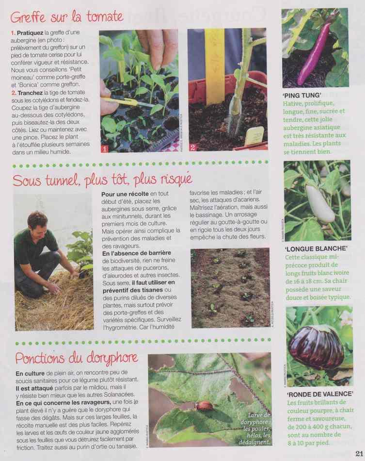 au jardin - Page 2 318