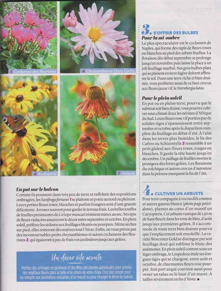 au jardin - Page 12 3210