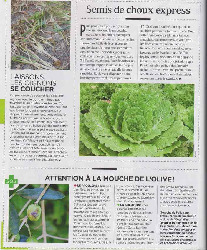 au jardin - Page 6 337