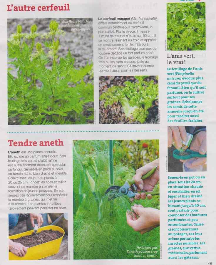 au jardin - Page 7 340