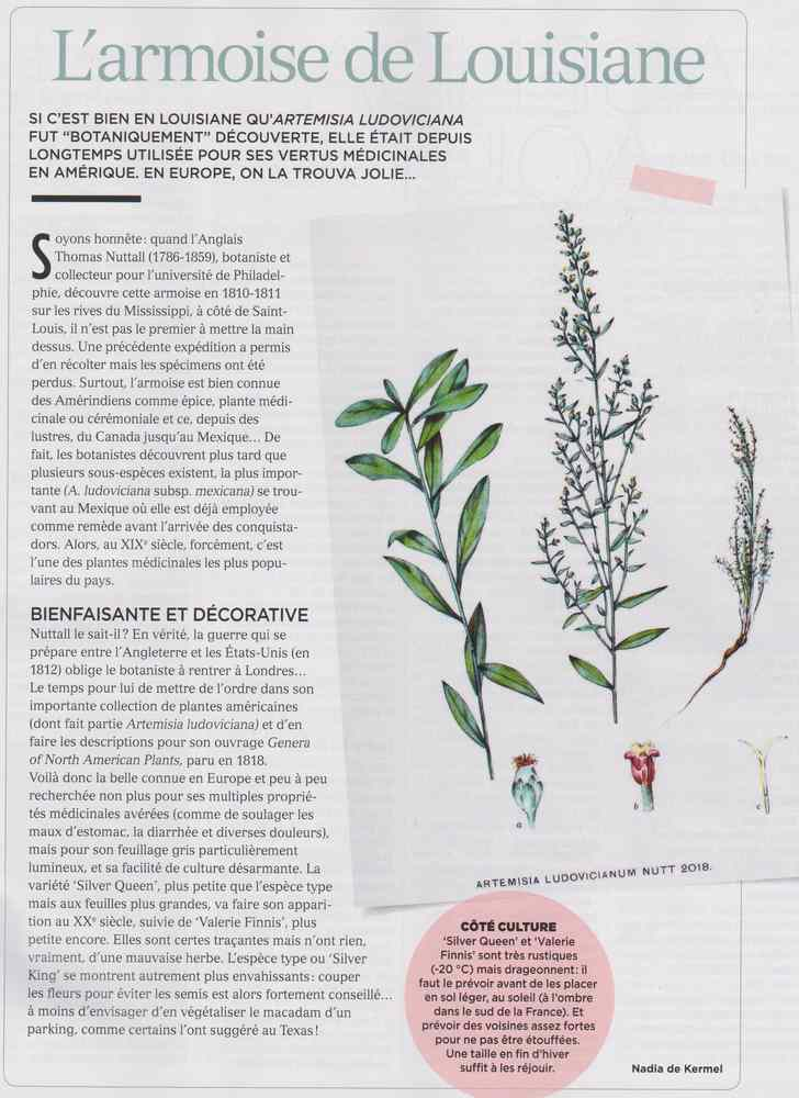 les plantes qui soignent - Page 7 346