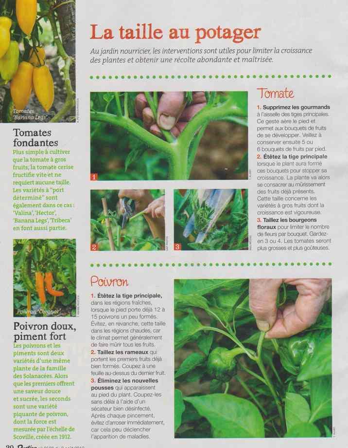 au jardin - Page 9 349