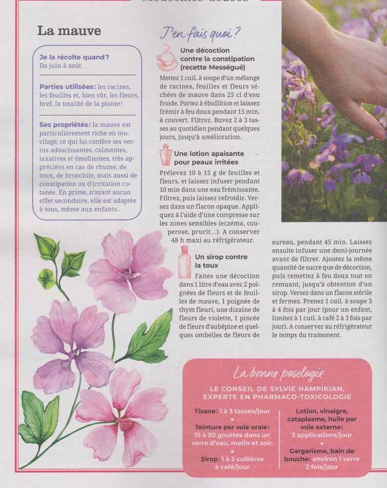les plantes qui soignent - Page 7 351