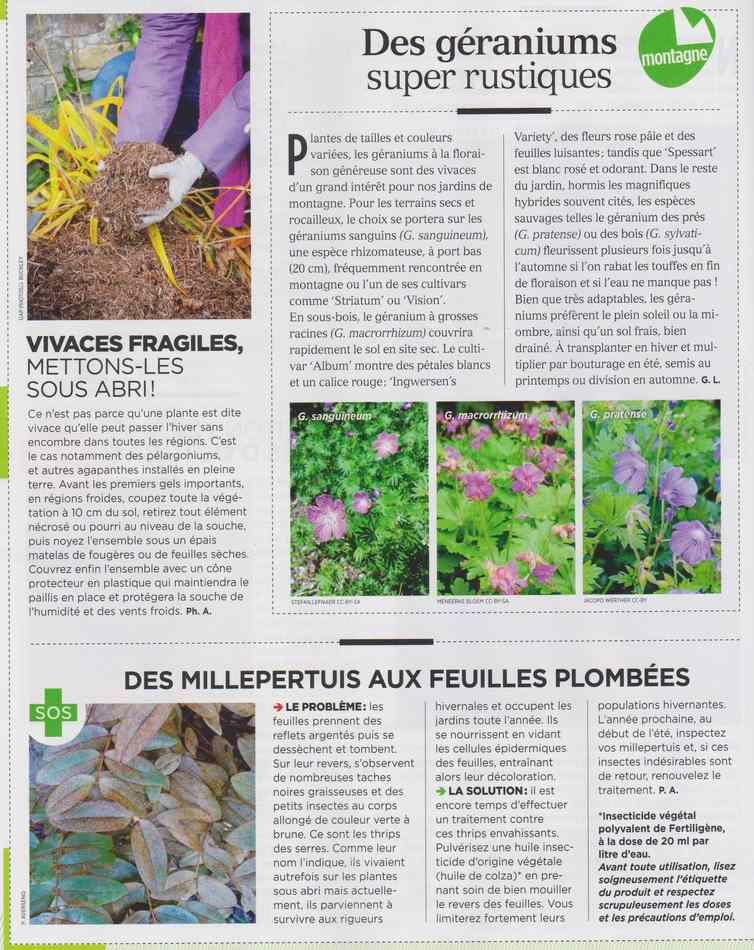 au jardin - Page 17 3611