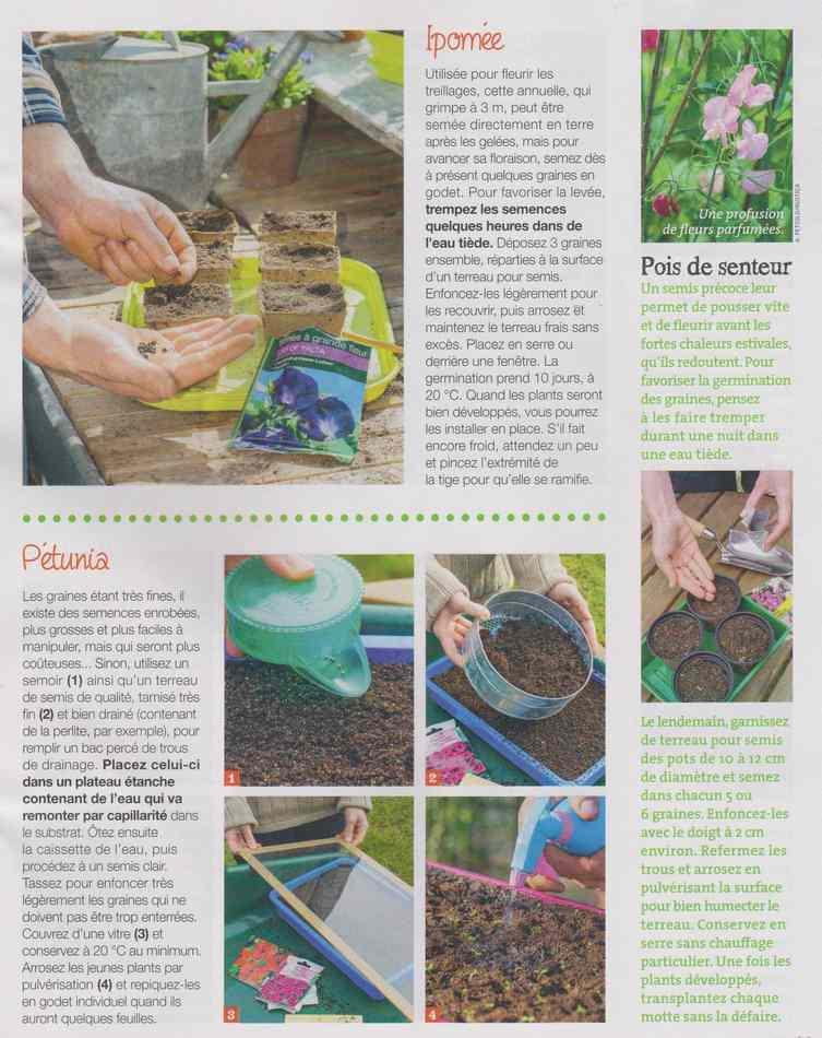 au jardin - Page 28 3815