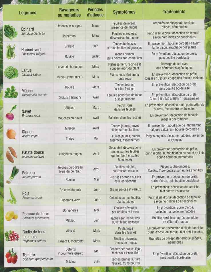 au jardin - Page 28 387