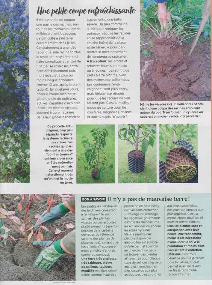 au jardin - Page 18 3910