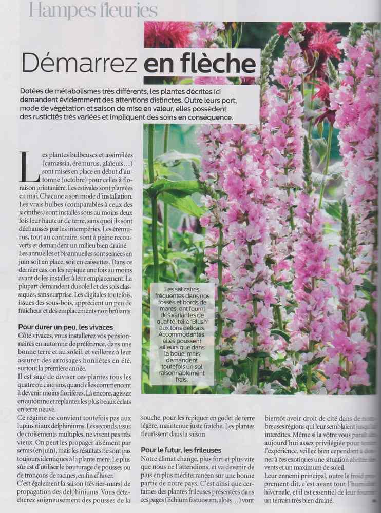 au jardin - Page 17 4012