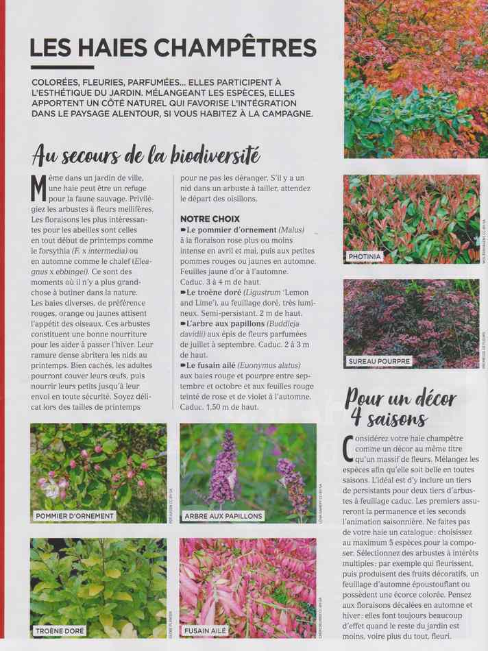 au jardin - Page 12 4110