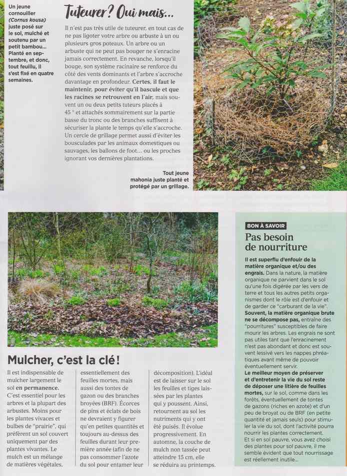 au jardin - Page 18 4114