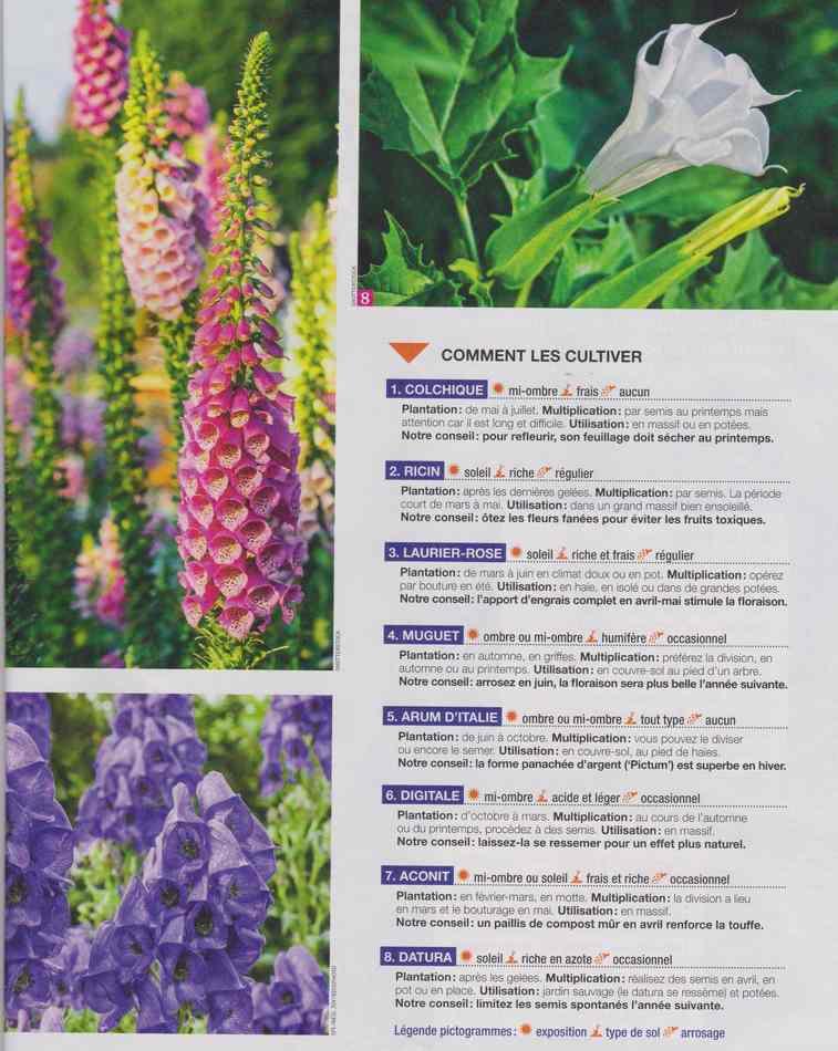 au jardin - Page 4 419