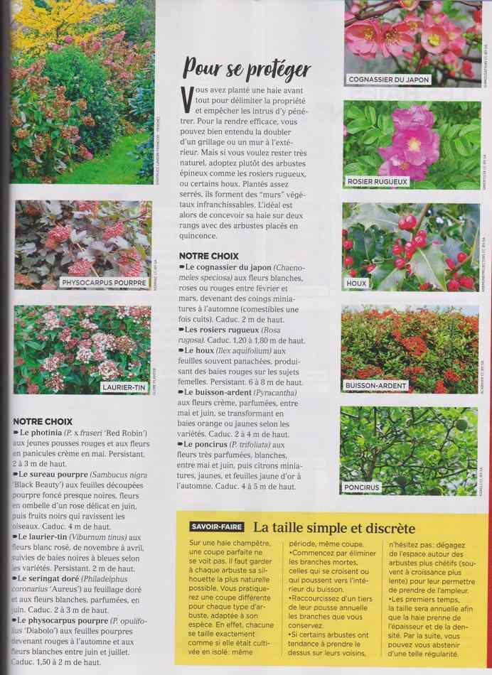 au jardin - Page 12 4210