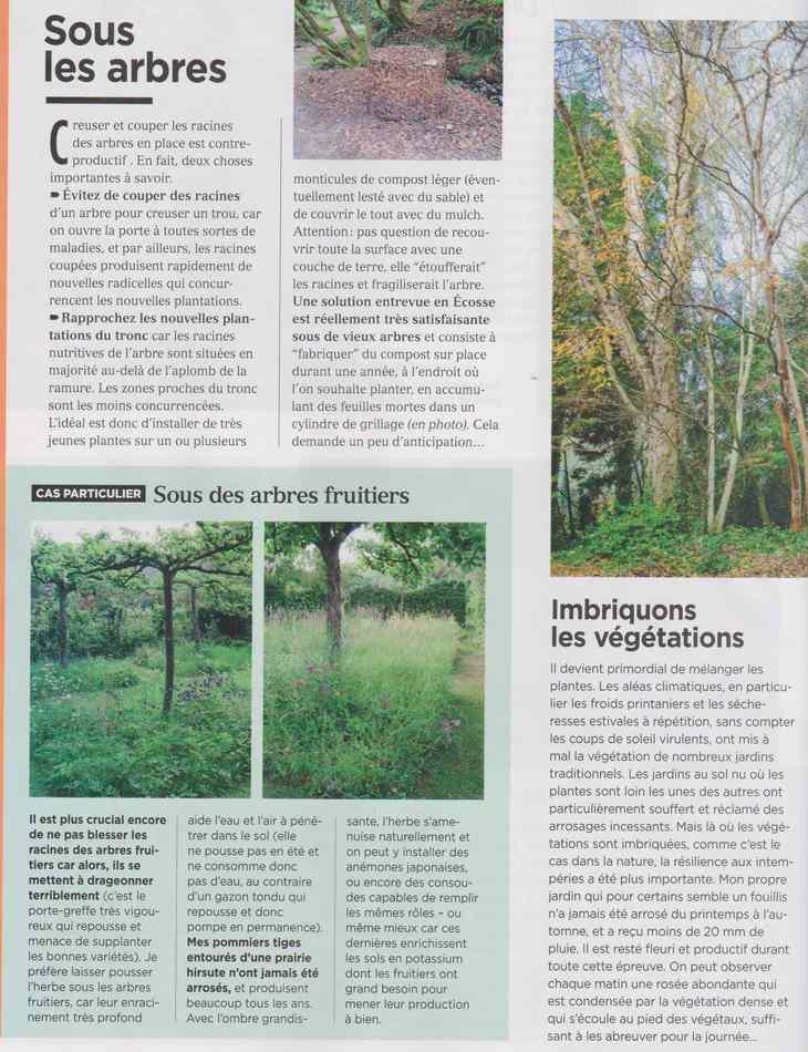au jardin - Page 19 4211