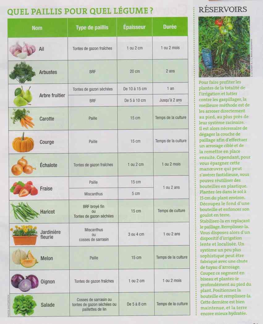 au jardin - Page 5 425
