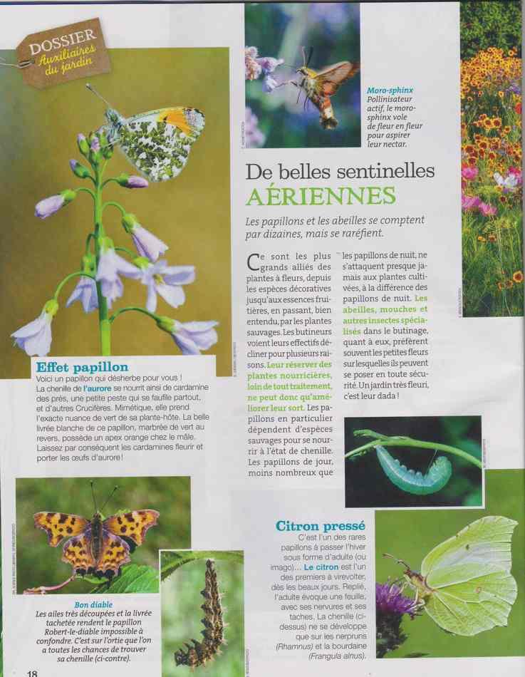 au jardin - Page 5 427