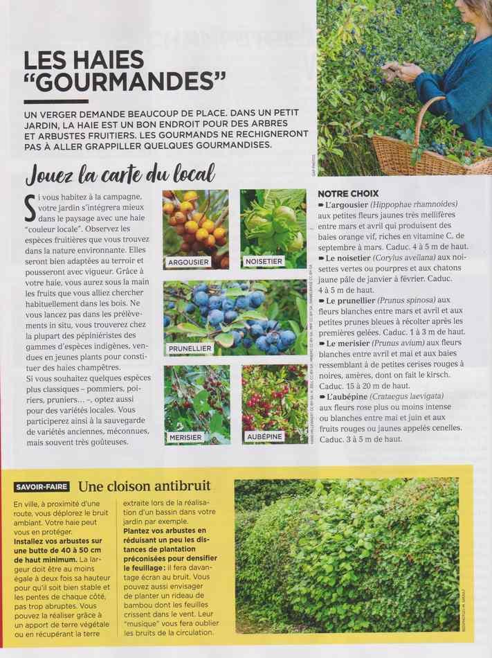 au jardin - Page 12 4310