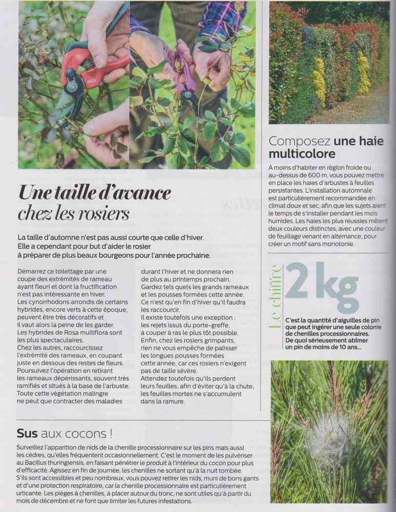 au jardin - Page 17 4311