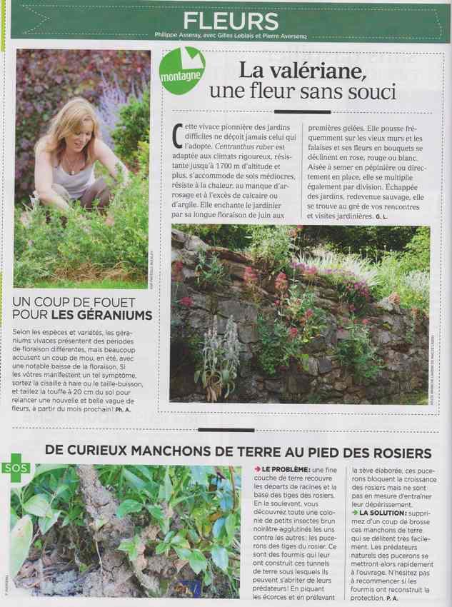 au jardin - Page 6 435