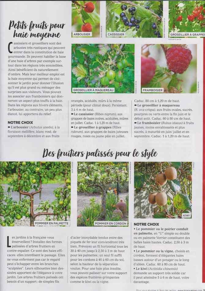 au jardin - Page 12 4410