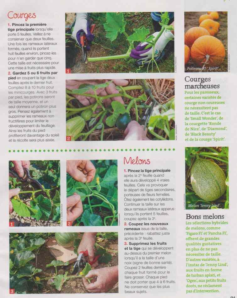 au jardin - Page 9 442