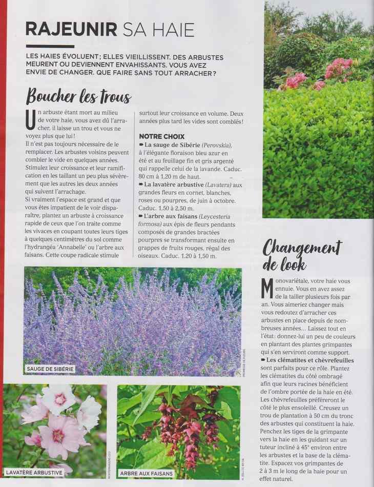 au jardin - Page 12 4710