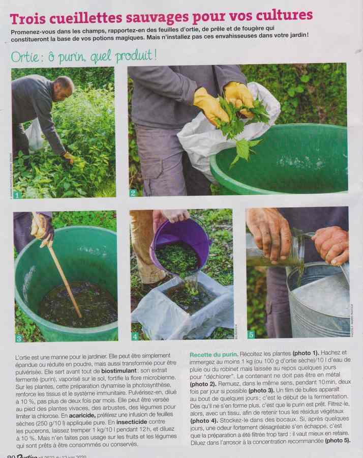 au jardin - Page 36 497
