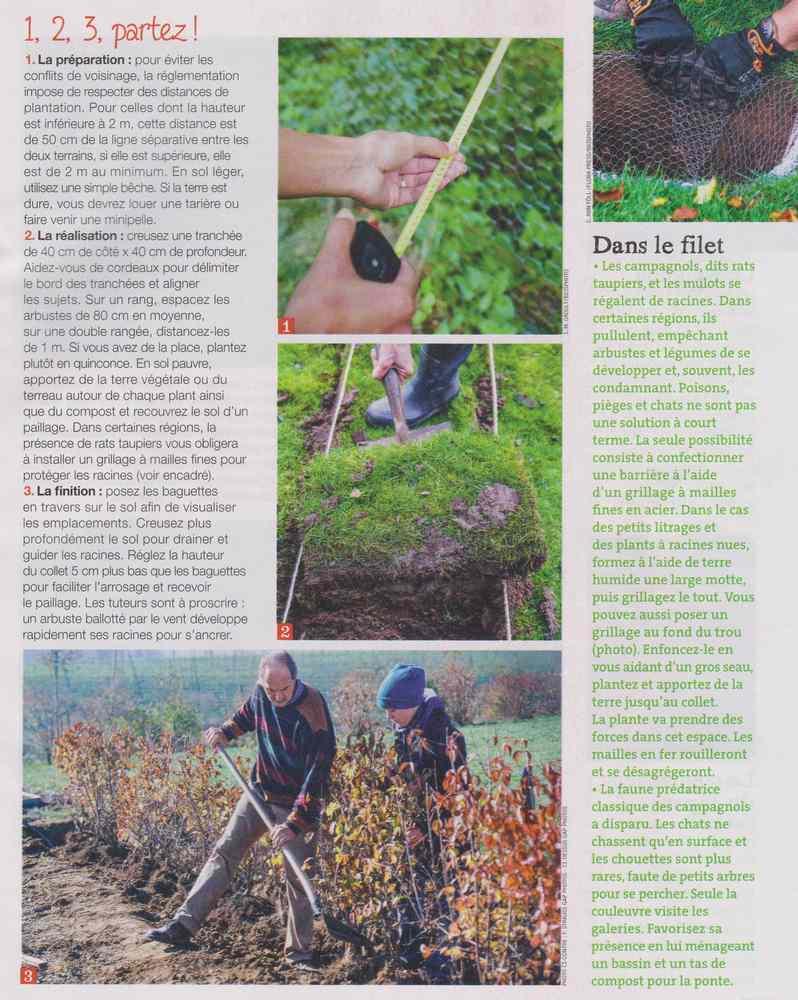au jardin - Page 18 5110