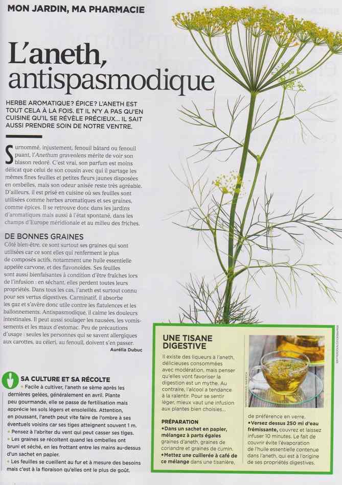 les plantes qui soignent - Page 4 516