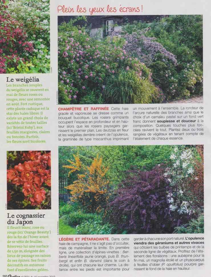 au jardin - Page 18 5210