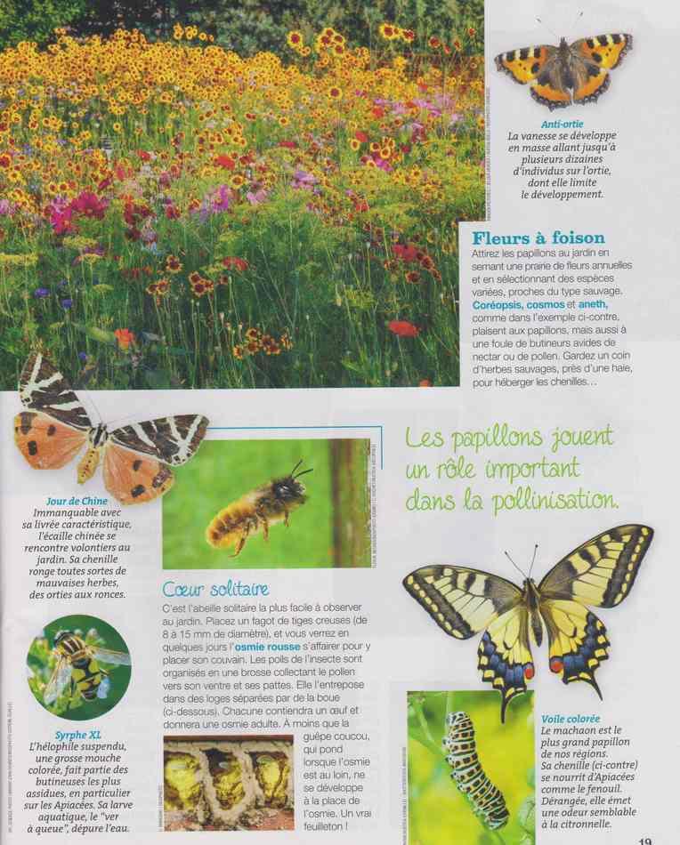au jardin - Page 5 523