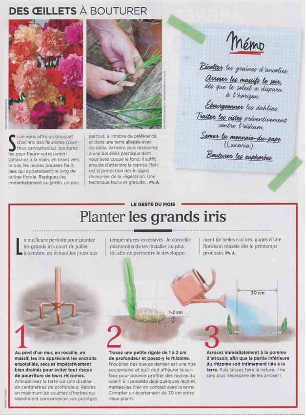 au jardin - Page 6 530