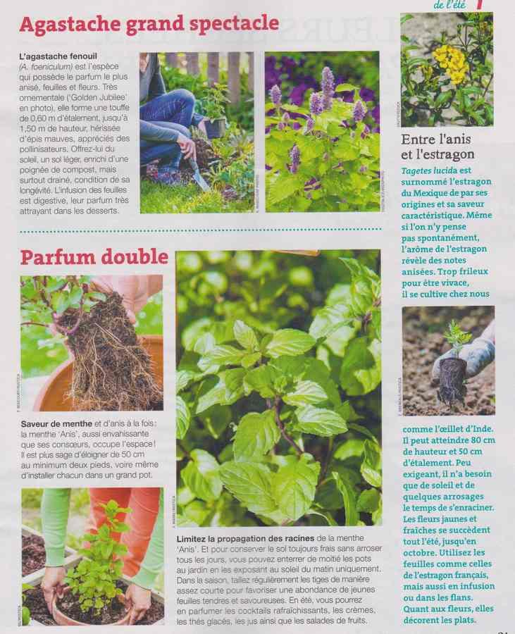 au jardin - Page 7 531