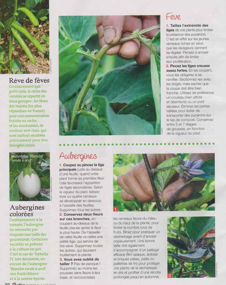 au jardin - Page 9 535
