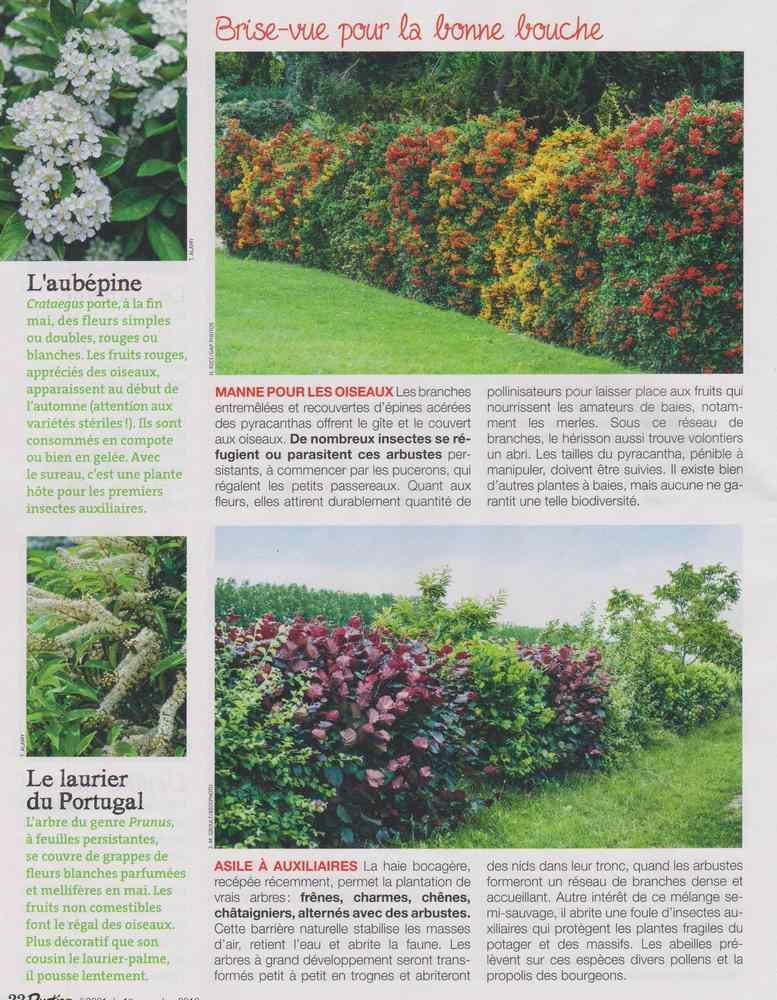 au jardin - Page 18 5410